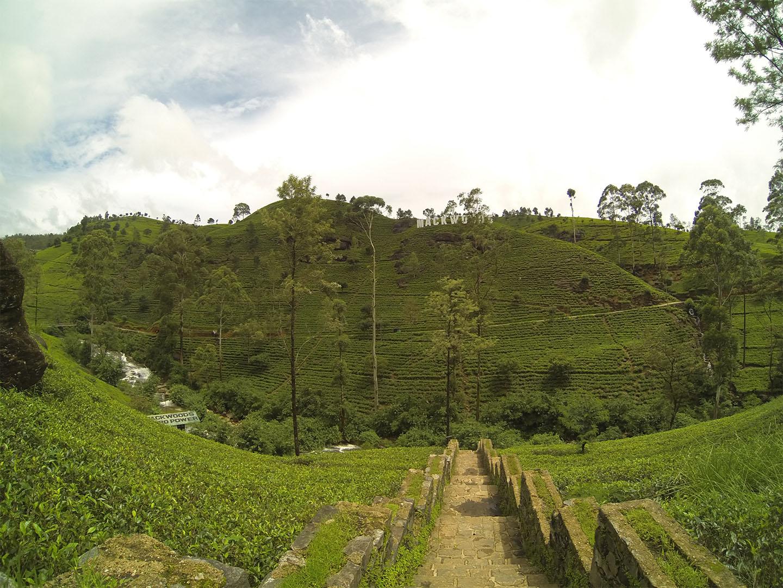 Sri Lanka cajove plantaze TravelNative